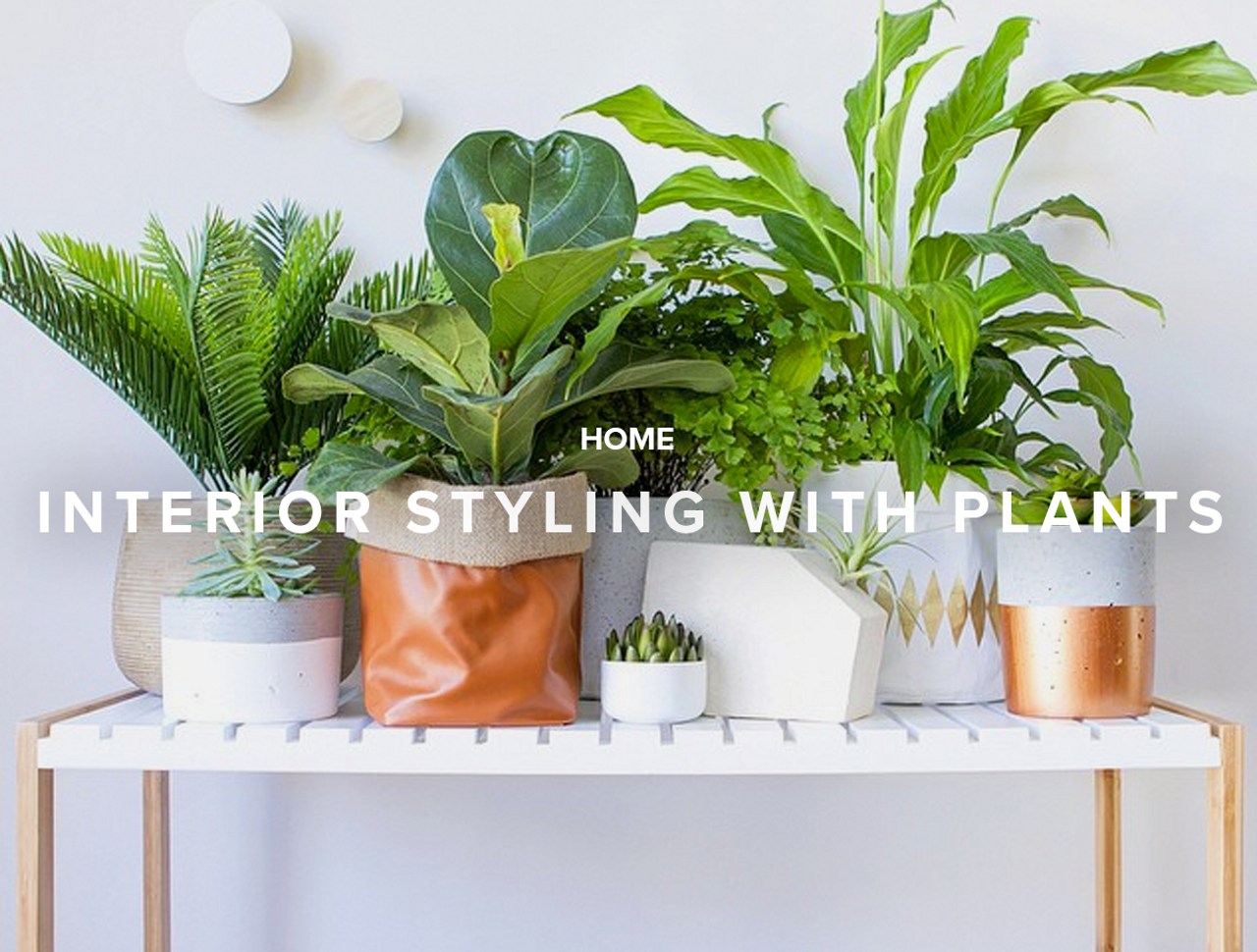 Interior Styling with Plants