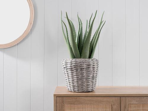 Aloe in Woven Basket