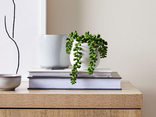 Pea Succulent in White Pot