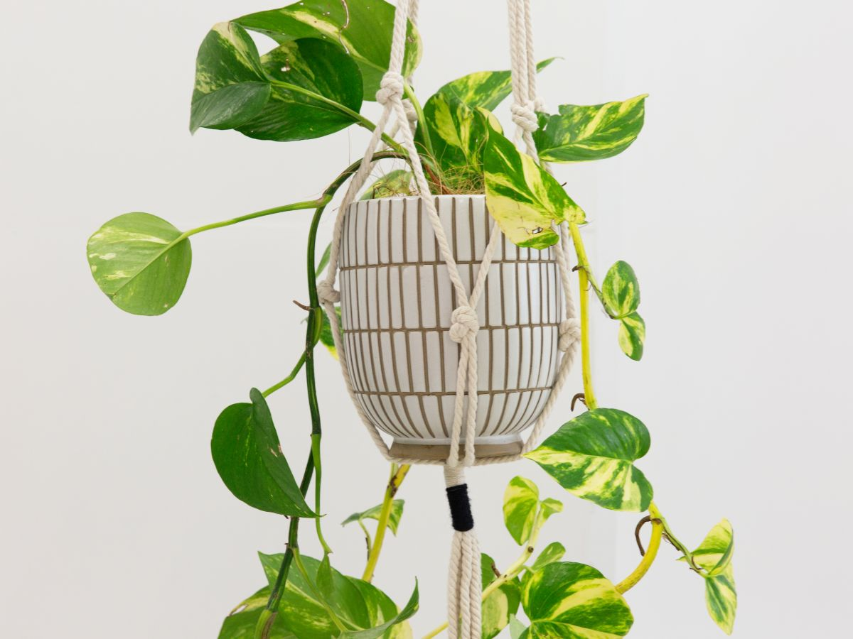 Leo Plant Hanger
