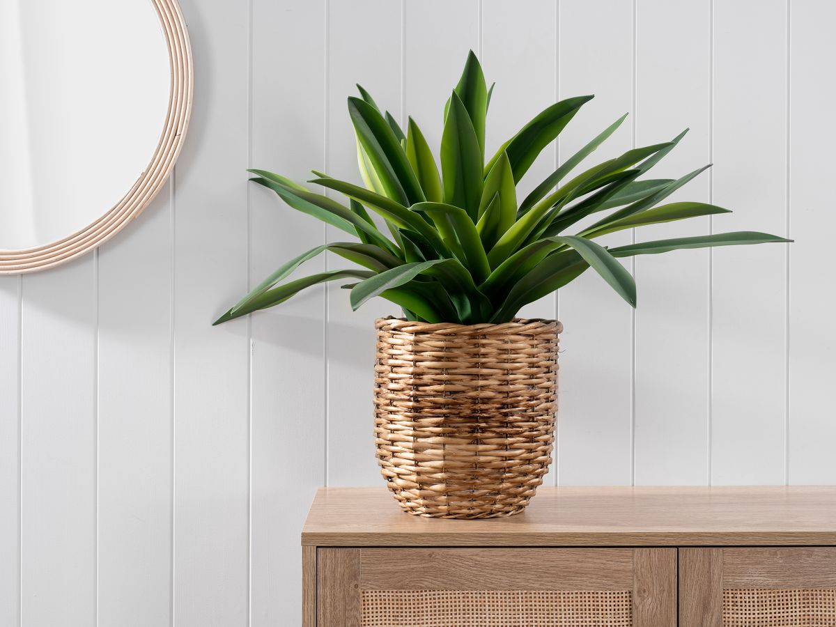 Bromeliad in Woven Basket