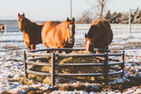 Cold Weather Feeding Tips