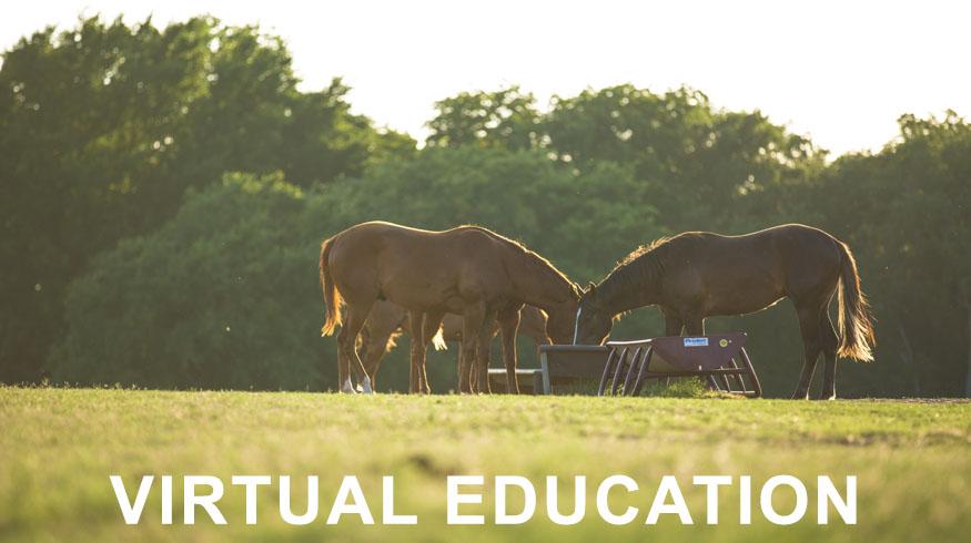 virtual-education-horses-feeding.jpg