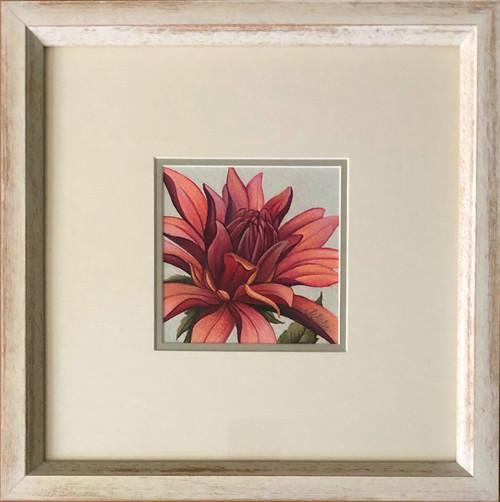 Floral Collection / Dahlia
