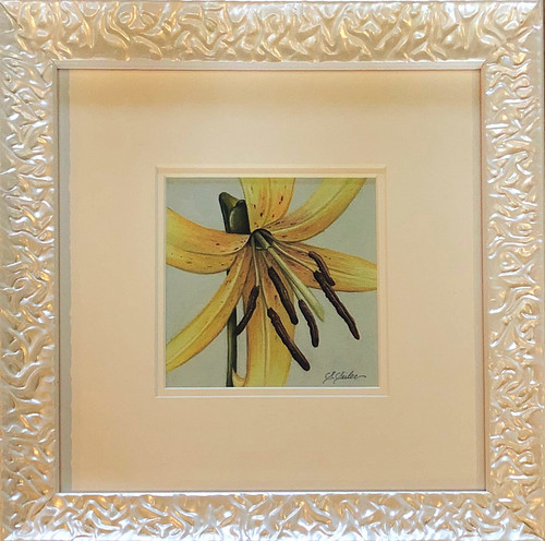 Floral Collection / Trout Lily - Giclee'