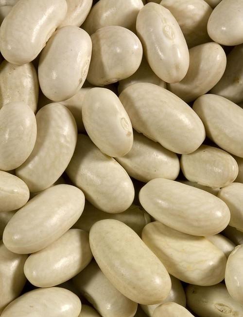 Shiloh Farms Navy Beans Organic