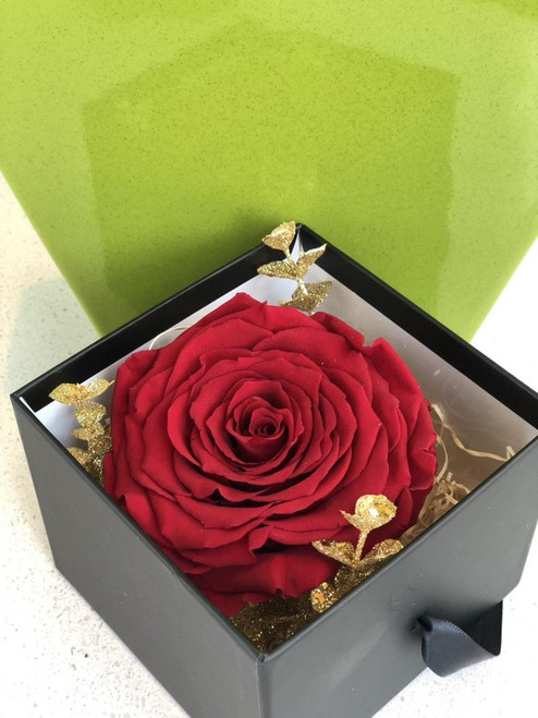 Single Rose in a Black Box