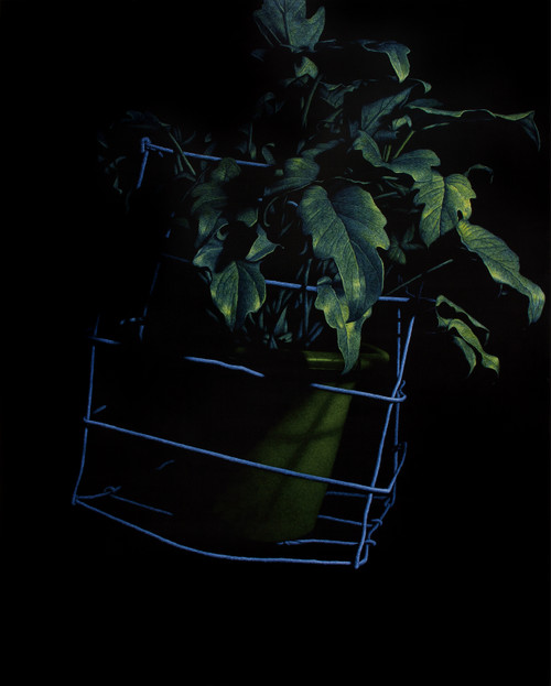 nameless plant 23 by Song Youngkyu. 2011. Acrylic on canvas.