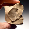 M325 - UPPER PALEOLITHIC FLINT FLAKE TOOL CORE BY CRO-MAGNON HUMANS FROM THE DORDOGNE OF FRANCE