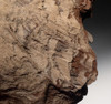 PL105 - RARE TRIASSIC PERMINERALIZED FOSSIL WOOD WITH SPARKLING DRUSY CRYSTALS FROM GERMANY