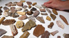 LARGE COLLECTION OF 70 FOSSIL DINOSAUR AND REPTILE BONES *BONELOT3