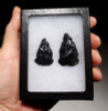 SET OF 2 NOTCH BASE PRE-COLUMBIAN OBSIDIAN ARROWHEADS *PC230