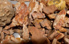 LARGE COLLECTION OF DINOSAUR REPTILE AND SHARK FOSSIL FRAGMENTS  *BONES1