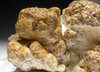 VERY LARGE OLIGOCENE NATURAL FOSSIL STROMATOLITE CYANOBACTERIA COLONY  *STX804