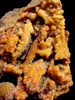 AMAZING LARGE ORANGE AGATIZED CORAL GEODE WITH RARE INTERNAL STRUCTURES *COR-033