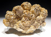 NATURAL FORM FOSSIL STROMATOLITE FROM AN ANCIENT OLIGOCENE LAKE  *STR582