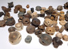 LARGE GROUP OF FOSSIL SHARK AND FISH VERTEBRAE  *SHX085