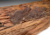 SUPER RARE PETRIFIED LOG FROM THE SOUTH CENTRAL SAHARA DESERT *PL161