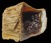 ROOTBEER AGATIZED CORAL WITH RARE INTERNAL BOTRYOIDAL CRYSTALS  *COR-026