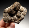 ST005 - NATURAL FORM 3D MINIATURE PERMIAN STROMATOLITE COLONY FROM GERMANY WITH STUNNING ANATOMY