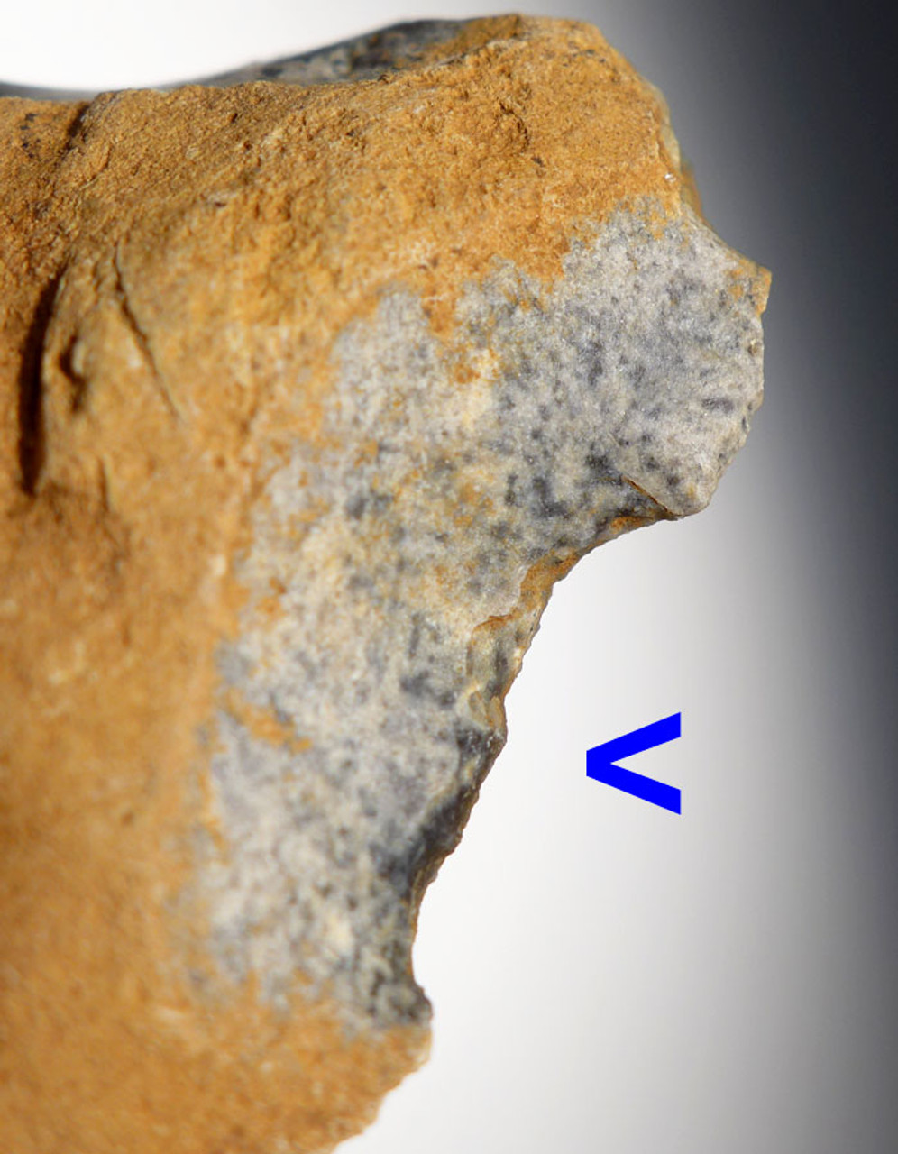 M303 - NEANDERTHAL MOUSTERIAN DOUBLE CONCAVE SCRAPER FLINT TOOL FROM FRANCE