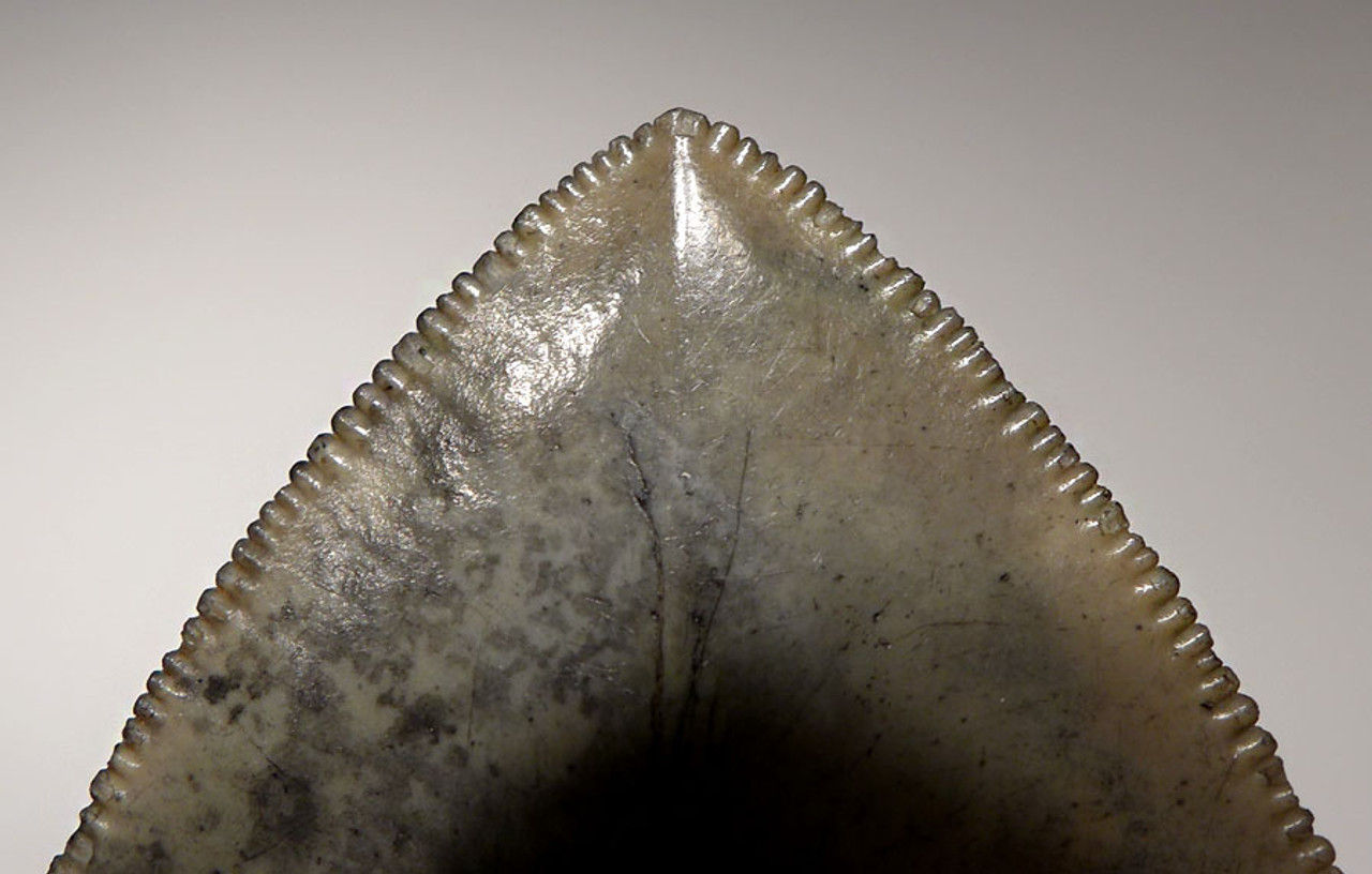 SH6-297 - COLLECTOR GRADE 4.5 INCH COLORFUL MEGALODON SHARK TOOTH