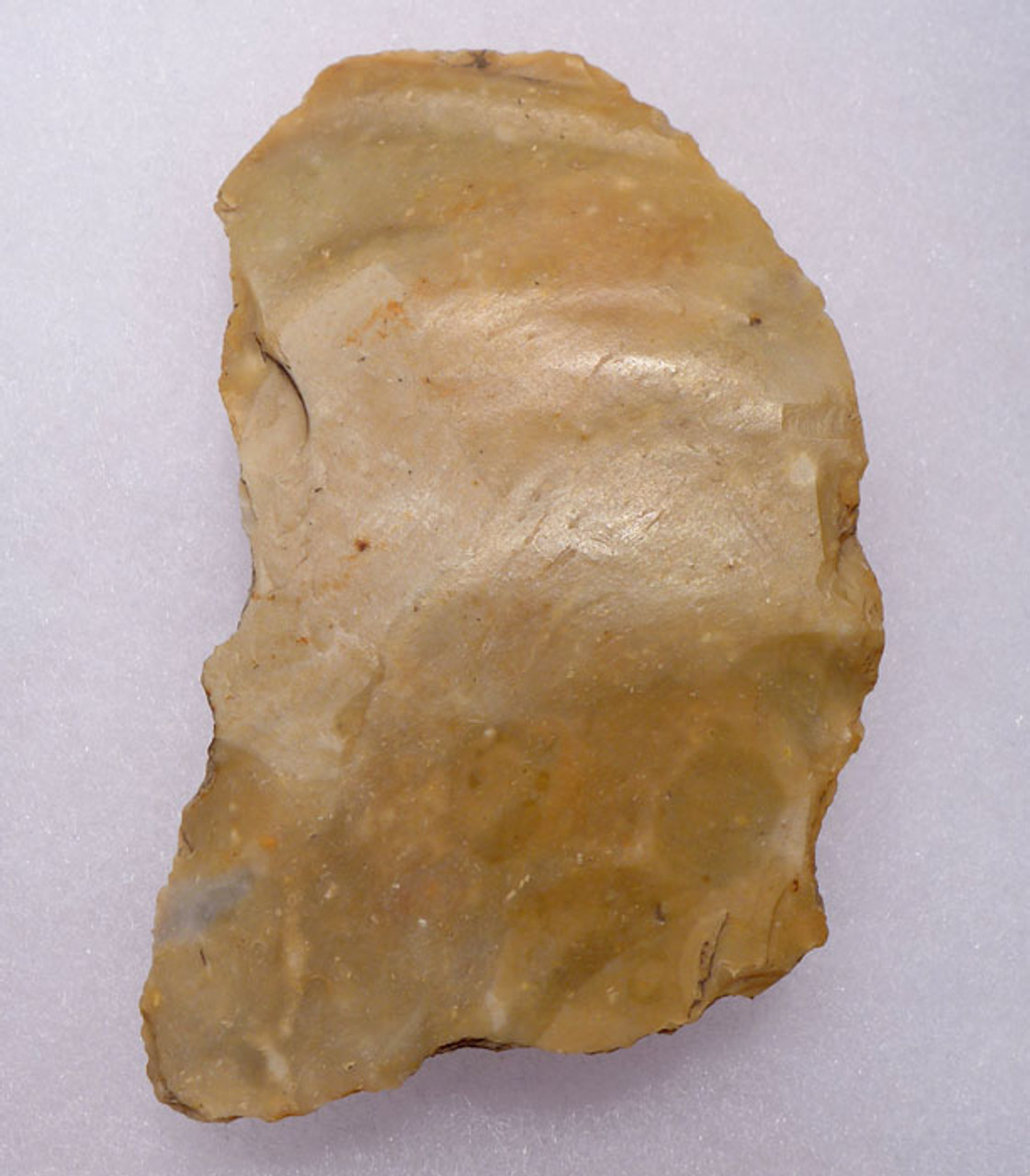 M309 - EXCEPTIONAL AND LARGE MOUSTERIAN NEANDERTHAL CONVEX FLAKE SCRAPER FROM FRANCE