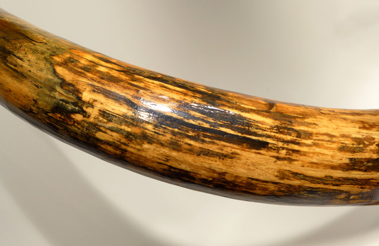 LMX113 - NEARLY 7 FOOT COMPLETE EUROPEAN WOOLLY MAMMOTH TUSK WITH THE FINEST COLOR PATTERNS AND FORM