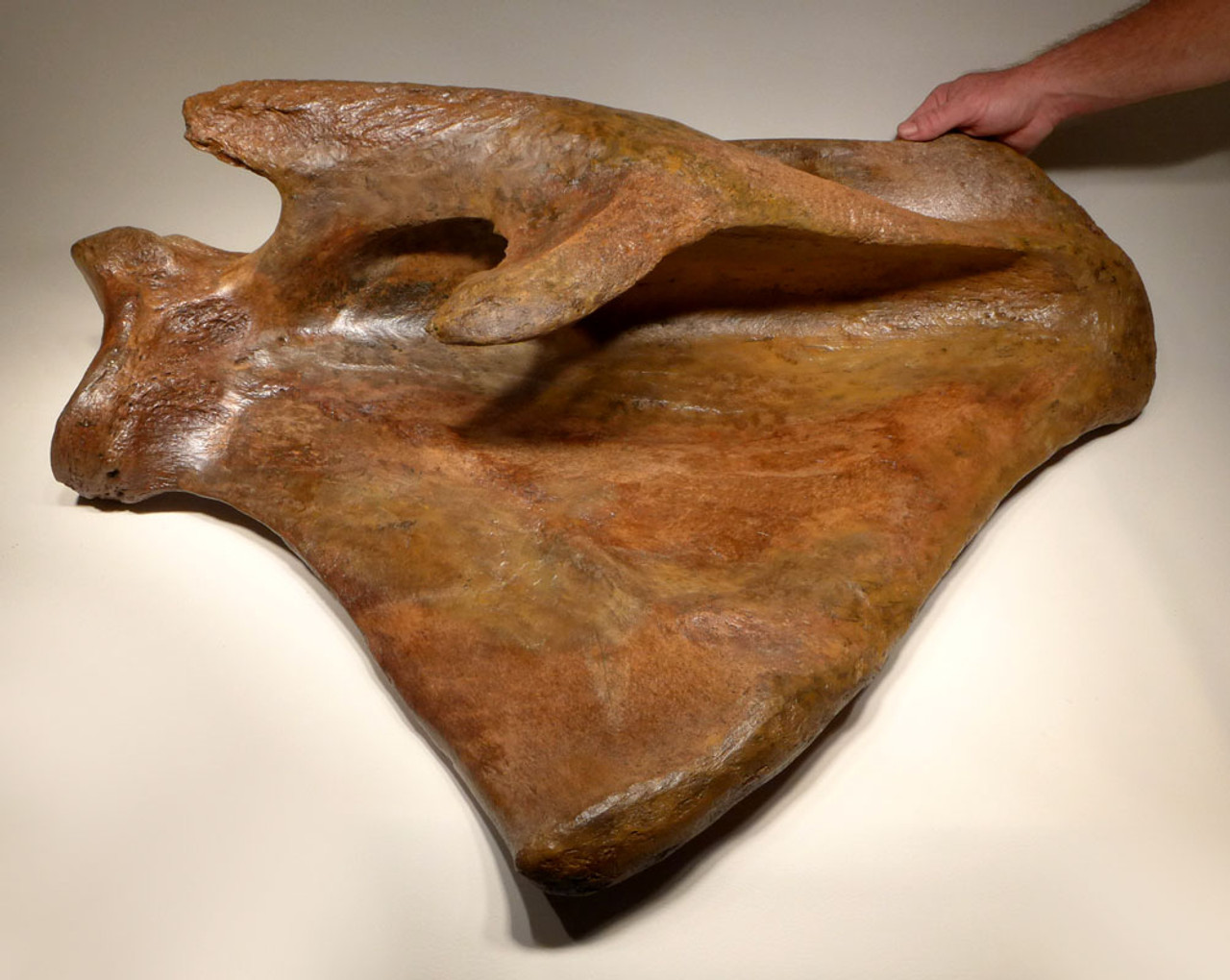 LMX158 - LARGE FOSSIL WOOLLY MAMMOTH SCAPULA SHOULDER BLADE BONE