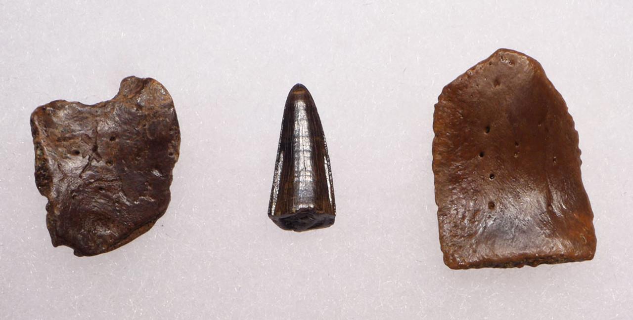 CROC041 - DINOSAUR-ERA LEIDYOSUCHUS CROCODILE TOOTH WITH ARMOR PLATES SCUTES