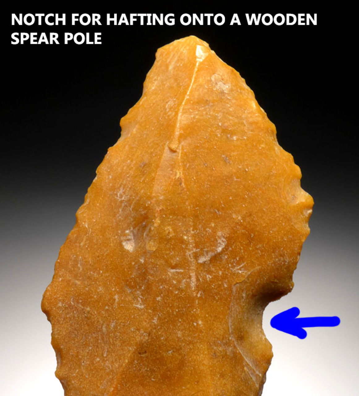 M353 - RARE FINEST LARGE NEANDERTHAL MOUSTERIAN POINT SPEARHEAD IN GOLDEN FLINT