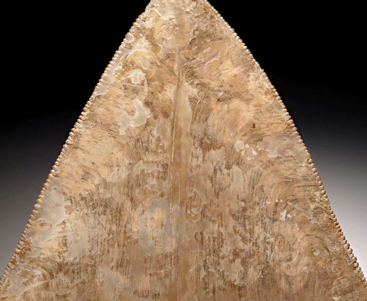 SH6-336 - INVESTMENT GRADE SPOTTED IVORY WHITE 4.8 INCH MEGALODON SHARK TOOTH WITH INCREDIBLE ENAMEL PATTERNS