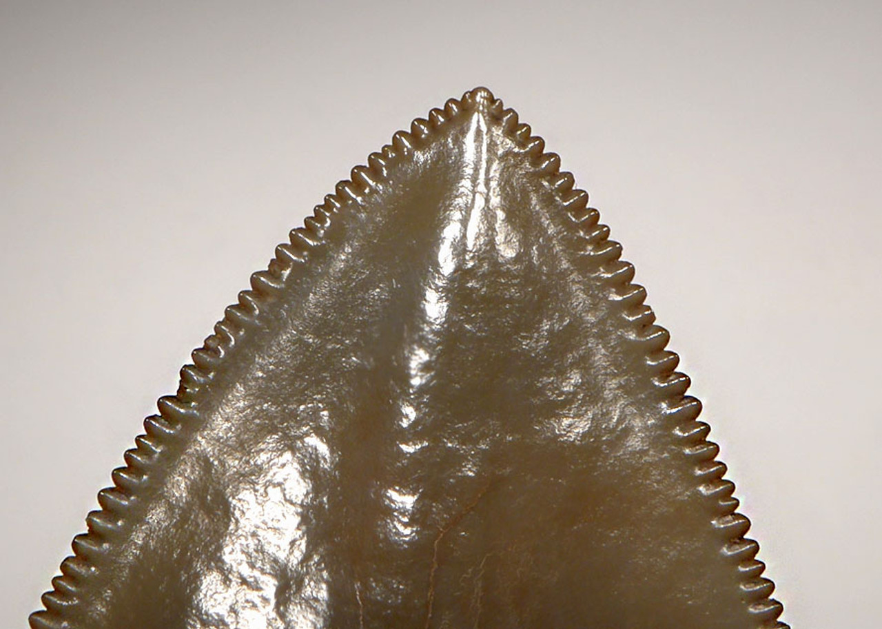SH6-338 - FINEST COLLECTOR GRADE GOLD AND ORANGE 4.2 INCH MEGALODON SHARK TOOTH
