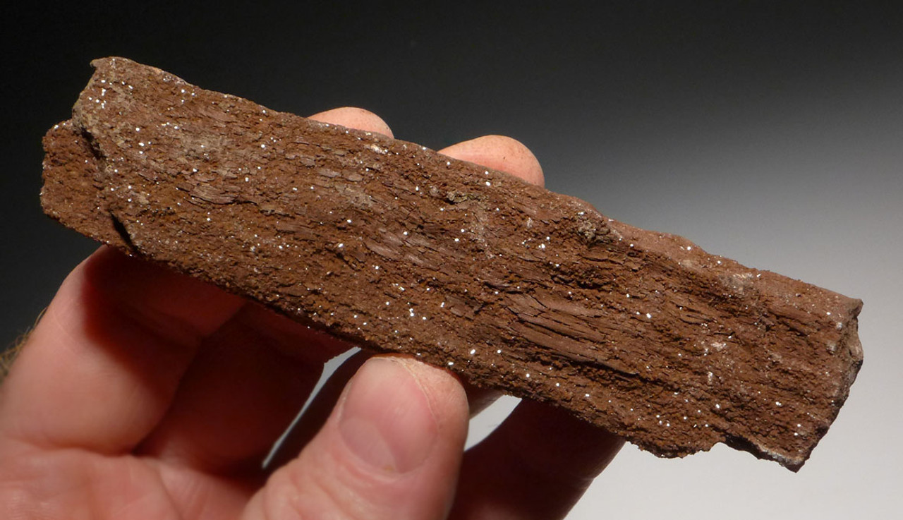 PL118 - RARE TRIASSIC PERMINERALIZED FOSSIL WOOD WITH SPARKLING DRUSY CRYSTALS FROM GERMANY