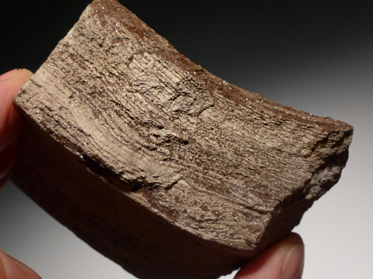 PL114 - RARE TRIASSIC PERMINERALIZED FOSSIL WOOD WITH SPARKLING DRUSY CRYSTALS FROM GERMANY