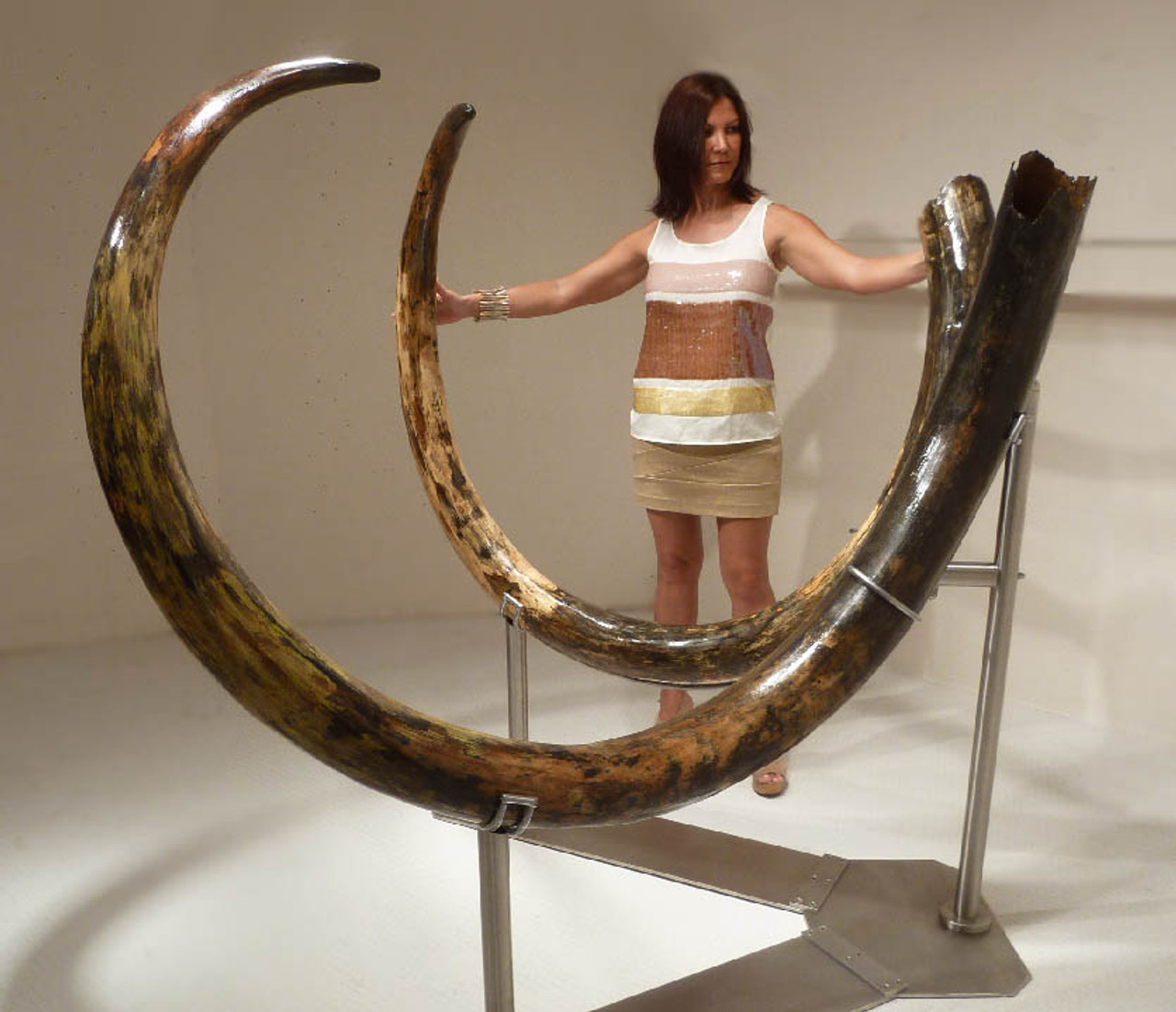 LARGEST PAIR OF MAMMOTH TUSKS