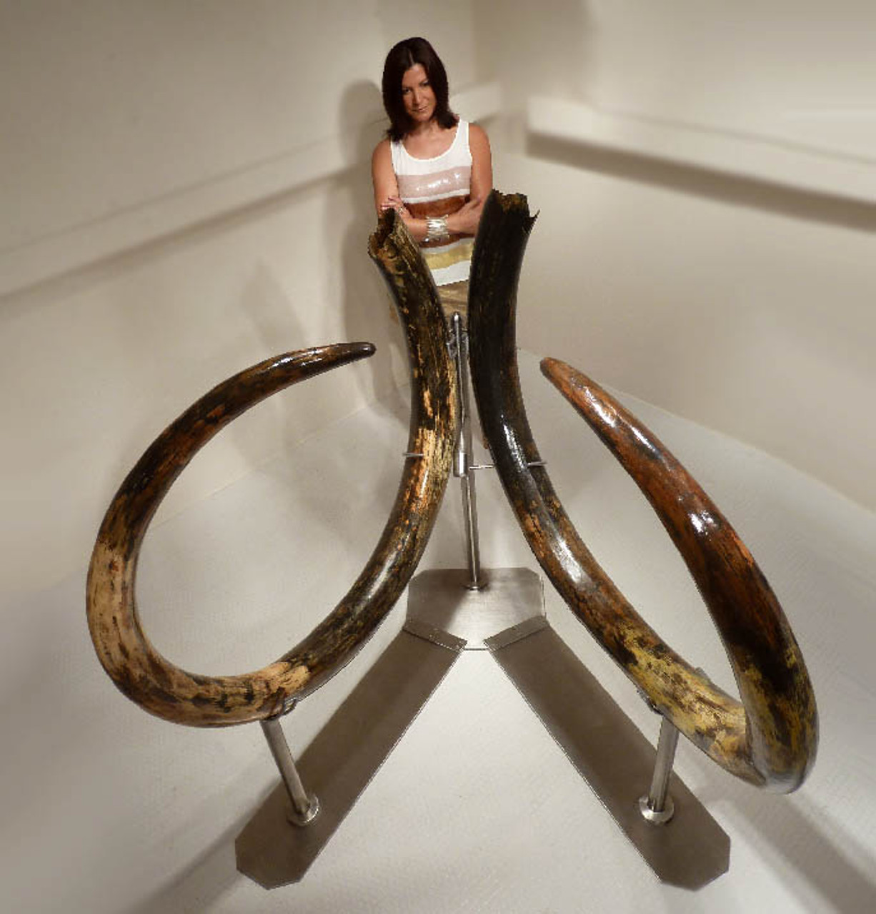 INVESTMENT-GRADE  LARGEST 11.5 FOOT PAIR OF WOOLLY MAMMOTH TUSKS FROM EUROPE'S FINAL ICE AGE *MTX001