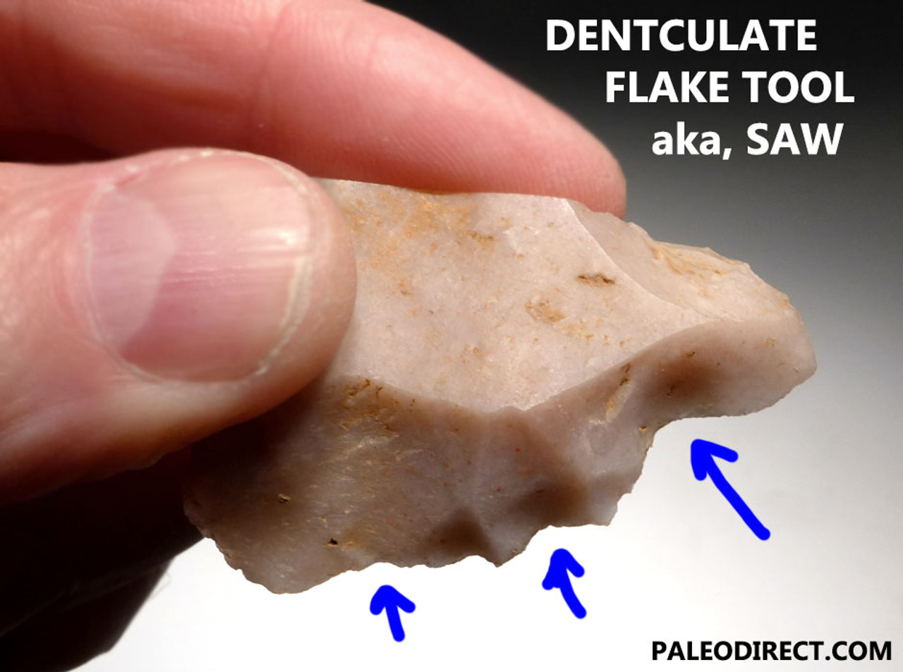 UP018 - UPPER PALEOLITHIC DRAMATIC SAW DENTICULATE FLAKE TOOL FROM FAMOUS CRO-MAGNON SITE IN FRANCE