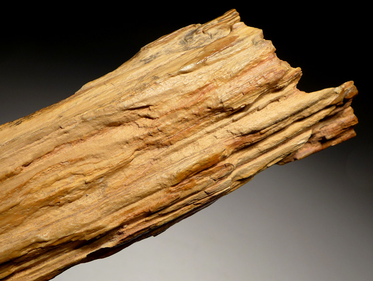PL128 - SUPER RARE LIFELIKE PETRIFIED LOG FROM THE SOUTH CENTRAL SAHARA DESERT