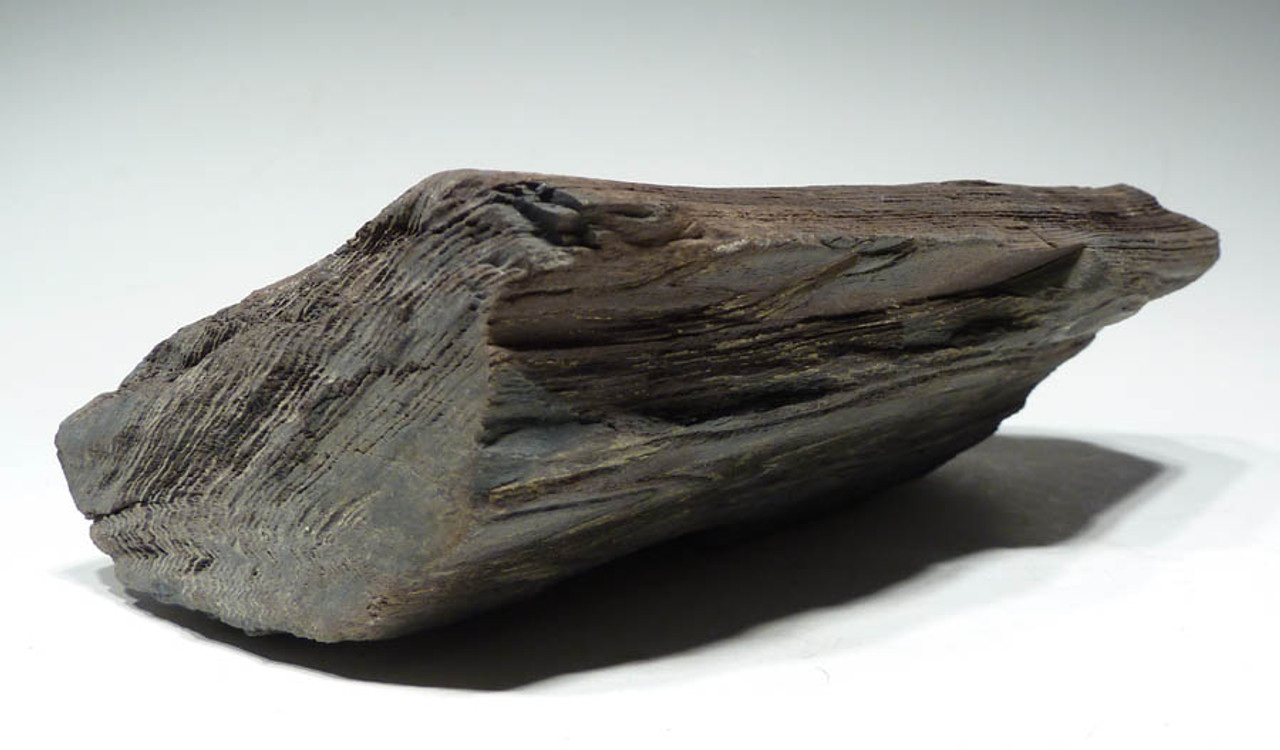 PL035 -  MIOCENE PETRIFIED WOOD IN LIFELIKE NATURAL FORM FROM EUROPE