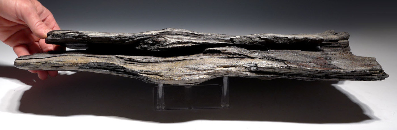 PMW001 - GIANT PREHISTORIC LOG FOSSIL WITH PETRIFIED WOOD NATURAL DETAIL