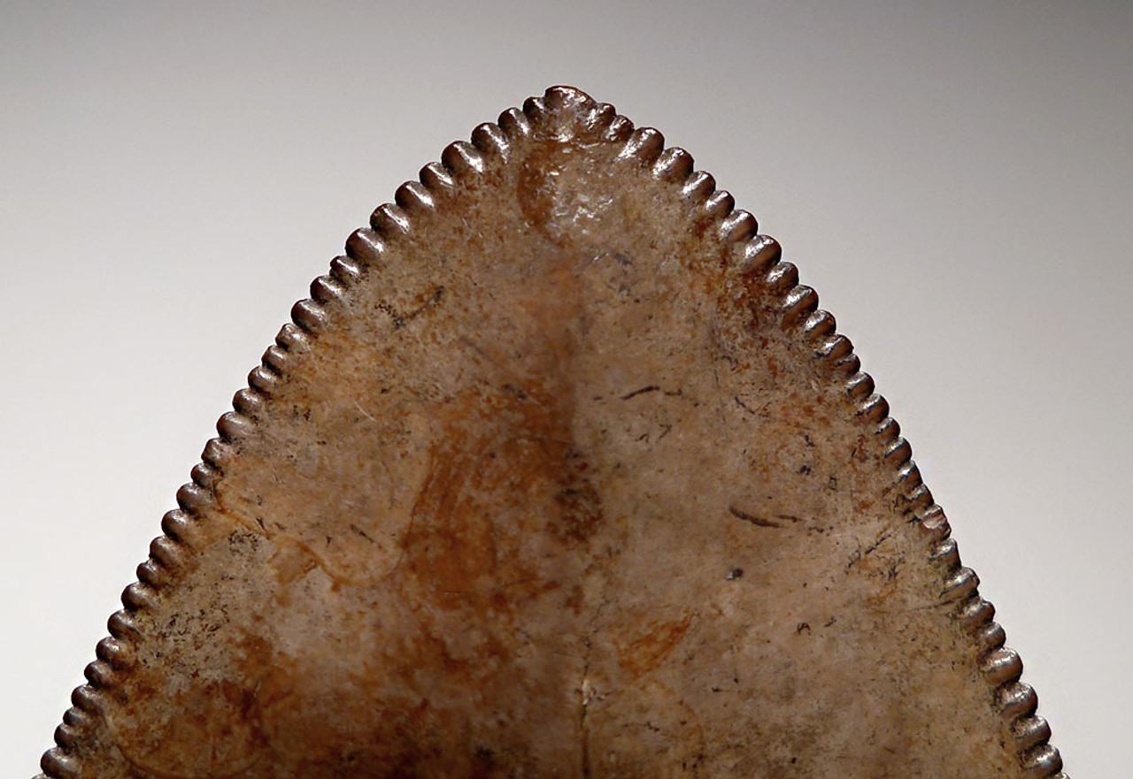 SH6-354 - COLLECTOR GRADE 3.9 INCH MEGALODON SHARK TOOTH WITH STUNNING MOTTLED COPPER RED ENAMEL