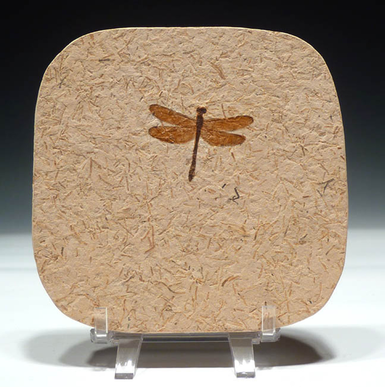 IN004 - CRETACEOUS DRAGONFLY INSECT FOSSIL OF EXCEPTIONAL COLOR AND DETAIL