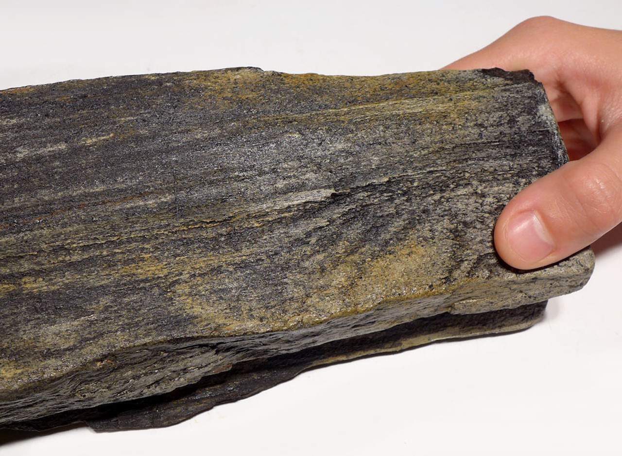 PL142 -  MIOCENE PETRIFIED PERMINERALIZED WOOD FOSSIL LOG IN LIFELIKE FORM FROM EUROPE