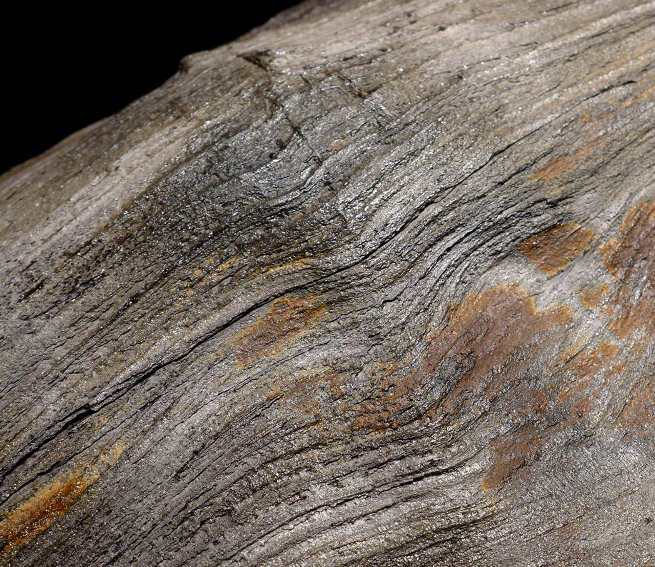 PL144 - INCREDIBLE MIOCENE FOSSILIZED WOOD GRAIN PETRIFIED PERMINERALIZED LOG FROM EUROPE