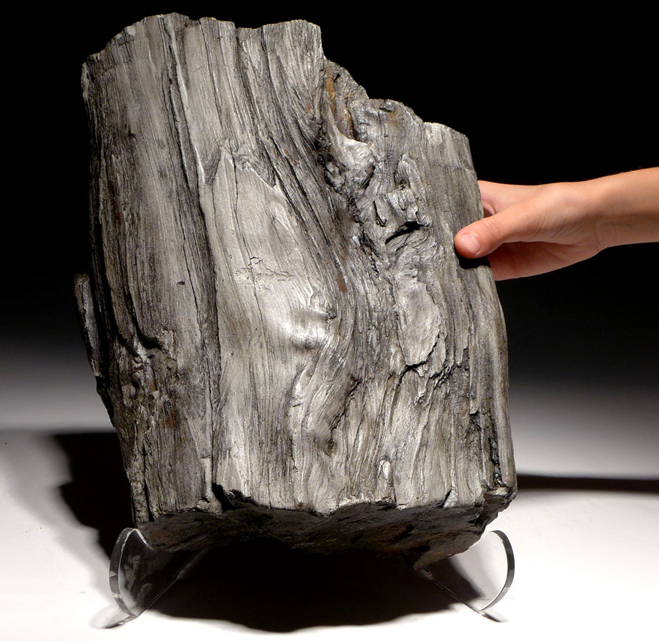 PL151 - GIANT PREHISTORIC LOG FOSSIL WITH PETRIFIED WOOD NATURAL DETAIL FROM THE MIOCENE