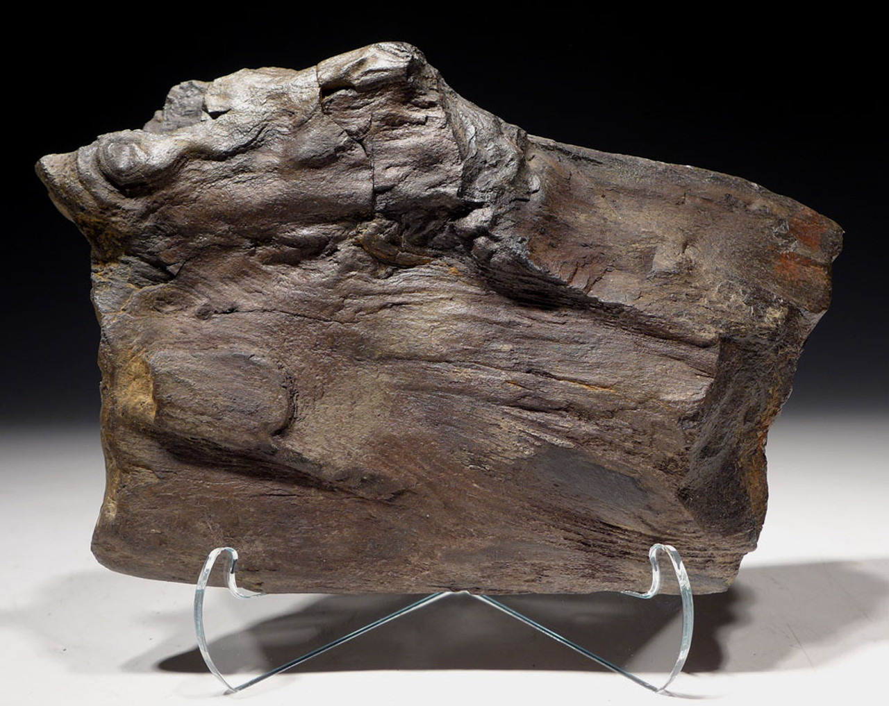 PL155 - PETRIFIED LOG WITH AMAZING FOSSILIZED WOOD GRAIN AND PERMINERALIZED DETAIL FROM EUROPE