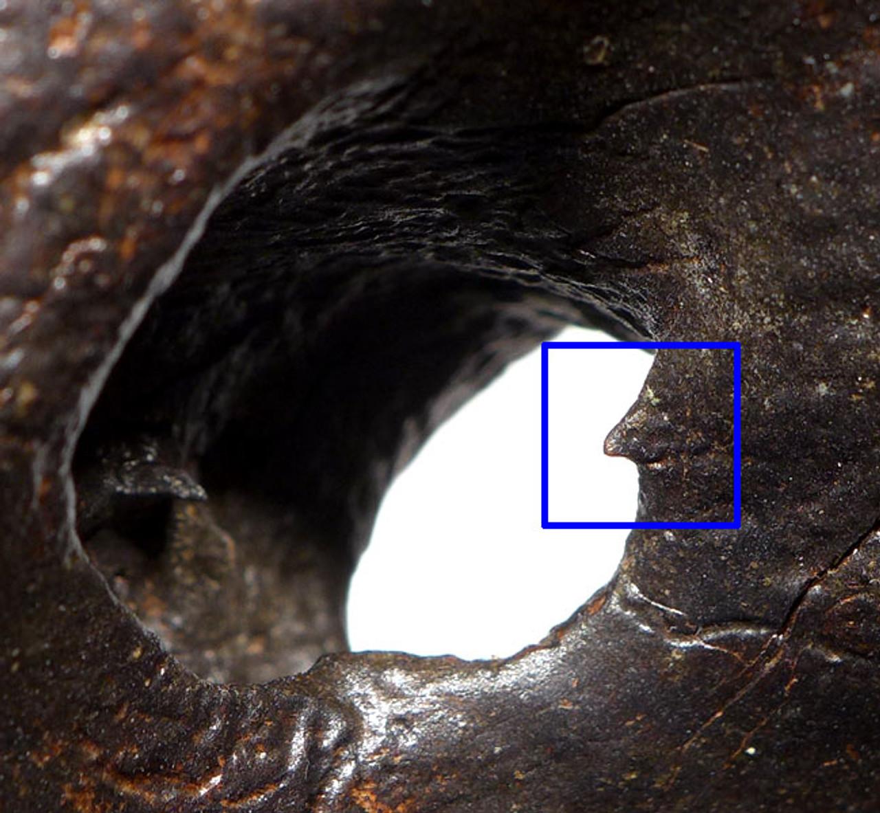 LMX168 - FOSSIL ATLAS VERTEBRA FROM A EUROPEAN ICE AGE STEPPE WISENT BISON