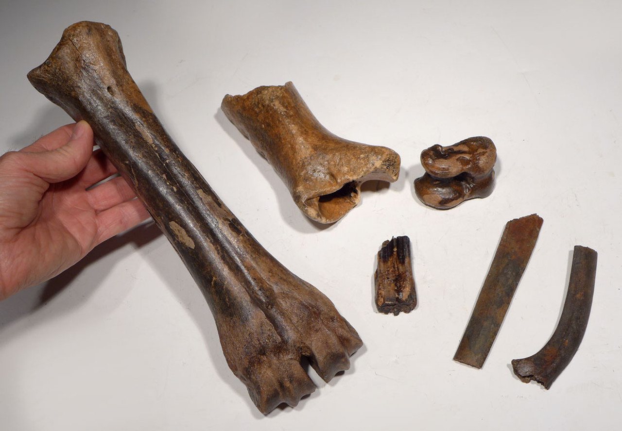 LMX173 - FOSSIL STUDY SET OF ICE AGE BISON AND HORSE FOSSILS FROM GERMANY