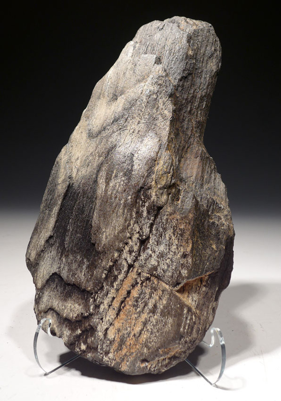 PL156 - LIFELIKE PETRIFIED FOSSIL LOG WITH PERMINERALIZED NATURAL DETAIL FROM THE MIOCENE